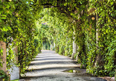 Archway in the park at summer. Green archway in the park at summer Royalty Free Stock Photo