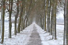 Archway of trees in winter day, concept alley. Archway of trees in winter, concept alley stock photos