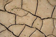 Arcilla agrietada molida con las pequeñas hojas verdes Foto de archivo libre de regalías