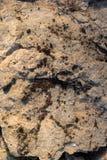 Arcilla aterrorizada agrietada cubierta con el musgo como fondo fotos de archivo libres de regalías