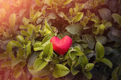 Arcilla en forma de corazón Fotografía de archivo libre de regalías