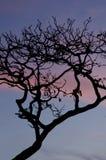 Arcipelago di Las Perlas Immagini Stock Libere da Diritti