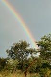 Arco-íris 2 imagem de stock