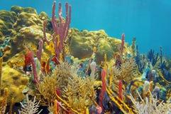 Arco-íris da cor sob o mar com corais e esponjas Fotos de Stock Royalty Free