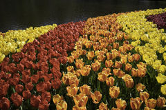 Arco-íris da flor foto de stock royalty free
