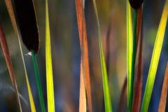 Arco-íris da queda Imagens de Stock