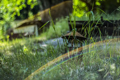 Arco-íris, porão, bokeh Fotografia de Stock