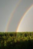 Arco-íris sob o forset fotografia de stock