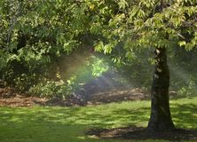 Arco-íris sob uma árvore foto de stock