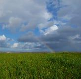 Arco-íris sobre campos das videiras e de campos de trigo verdes Imagens de Stock Royalty Free
