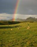 Arco-íris sobre a exploração agrícola dos carneiros Fotografia de Stock Royalty Free