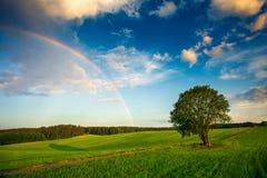 Arco-íris sobre um campo do verde da mola Fotografia de Stock