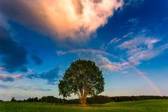 Arco-íris sobre um campo do verde da mola Imagens de Stock Royalty Free