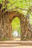 Arco antiguo en raíz del árbol en Wat Phra Ngam fotografía de archivo