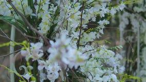 Arco bello di nozze per il matrimonio decorato con i fiori bianchi video d archivio