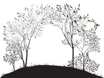 Arco da árvore Fotografia de Stock