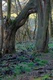 Arco das árvores no outono fotos de stock