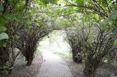 Arco de arbustos y de ramas verdes imágenes de archivo libres de regalías