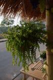 Arco de bambú Fotografía de archivo