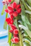 Arco de la boda adornado con las palmeras y las flores encendido Imagen de archivo libre de regalías