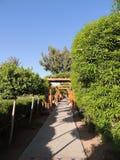 Arco de madeira da decoração da passagem com folha verde Foto de Stock