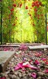 Arco de Rosa Fotografia de Stock Royalty Free
