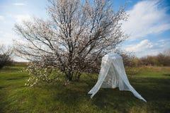 Arco decorativo do casamento em torno de uma árvore de florescência Fotos de Stock