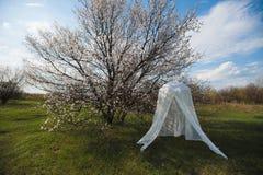 Arco decorativo do casamento em torno de uma árvore de florescência Imagens de Stock
