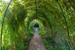 Arco degli alberi fotografia stock