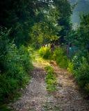 Arco dei rami di albero, dei fiori selvaggi e dell'erba alta Fotografie Stock Libere da Diritti