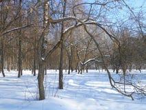 Arco del árbol en el parque del invierno Imágenes de archivo libres de regalías