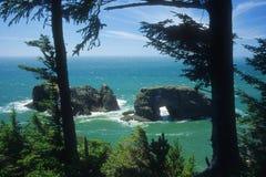 Arco del mare del litorale dell'Oregon Immagine Stock Libera da Diritti