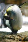 Arco del pinguino Immagini Stock