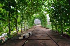Arco dell'albero con il cane di sonno nella priorità alta nella città Tailandia di Chiangmai Immagine Stock
