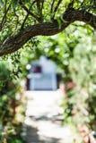 Arco dell'albero di salice e della porta domestica Fotografia Stock