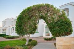 Arco dell'albero verde Immagini Stock