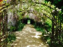 Arco di glicine a Hampton Court Castle, Leominster Immagini Stock