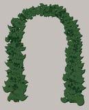 Arco di nozze delle foglie verdi Fotografia Stock