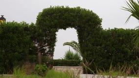 Arco e cerca florais verdes bonitos no dia ventoso nebuloso vídeos de arquivo