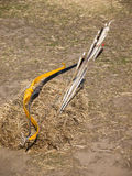Arco e frecce Immagini Stock