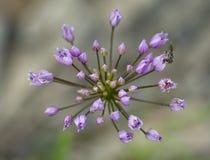 Arco e mosca del fiore Fotografie Stock Libere da Diritti