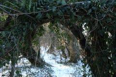 Arco en el bosque Fotografía de archivo libre de regalías