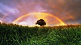 Arco iris Fotografía de archivo libre de regalías