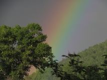 Arco iris Cielo azul del bosque ruso imagen de archivo