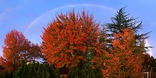 Arco iris con Autumn Leaves Fotos de archivo