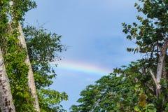Arco iris contra un fondo nebuloso del cielo azul enmarcado por las plantas tropicales fotografía de archivo