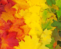 Arco iris del follaje Imagen de archivo libre de regalías