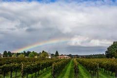 Arco iris en los campos de la uva fotografía de archivo libre de regalías