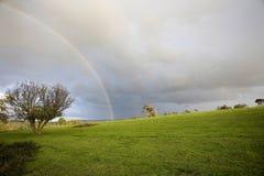 Arco iris en un paisaje de la hierba Fotos de archivo libres de regalías