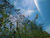 Arco iris romántico en el cielo fotografía de archivo